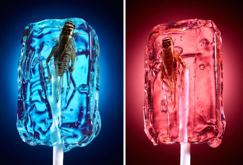 Lucas Zarebinski photography - Bug Lollipops