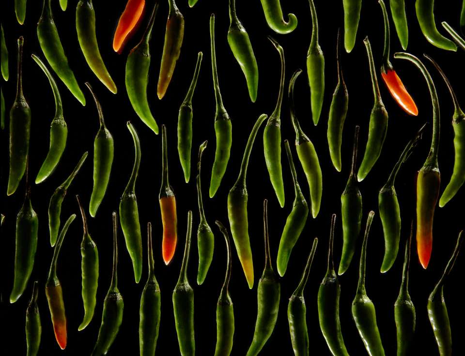 Lucas Zarebinski photography - Thai Peppers